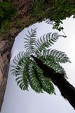 Tree Fern Stock Photos