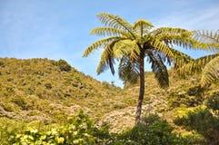 Tree fern. Abel Tasman national park, New Zealand Stock Photos