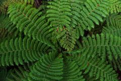 Tree fern from above royalty free stock photo