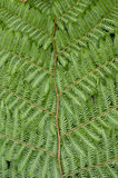 Tree fern detail Stock Photo