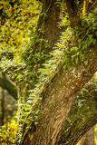 Tree with Fern Royalty Free Stock Photos