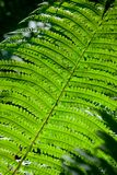 Tree fern leaf Stock Photos