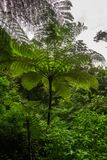 Tree Fern in rain forest Stock Photos