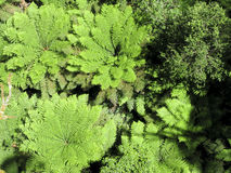 Tree fern seen from above Stock Photo