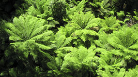 Tree fern seen from above Stock Photos