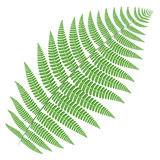 Tree fern Stock Photo