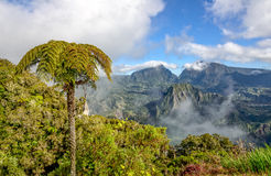 Tree fern and view of the cirque de Salazie, la Reunion Stock Images