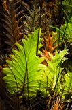 On tree ferns Royalty Free Stock Photos