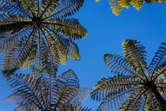 Tree ferns against blue sky. Silhouette of tree ferns against blue sky Stock Images