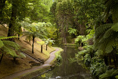 Tree Ferns in old park in Furnas , Sao Michel , Azores. Royalty Free Stock Photography