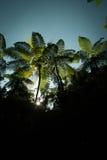 Tree ferns Stock Photography