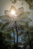 Tree ferns Stock Photos
