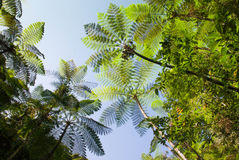 Tree ferns Stock Images
