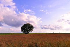 Tree on a field Royalty Free Stock Images