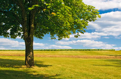 Tree in a field Royalty Free Stock Photography