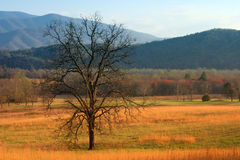 Tree in field. Cades Cove, Great Smoky Mountains royalty free stock image