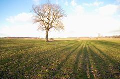 Tree on a field Stock Image