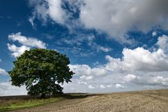 Tree in a field Stock Images