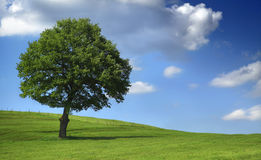 Tree on field Royalty Free Stock Image
