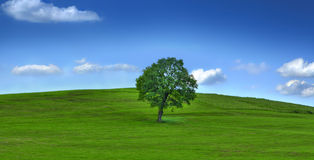 Tree on field Stock Images