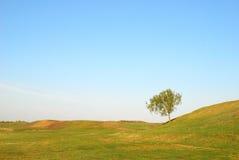 Tree in field Stock Photos