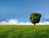Tree on field. Alone tree on grass field royalty free stock photos