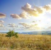 Tree in field Stock Image