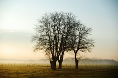 Tree on field Royalty Free Stock Photography