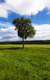 Tree in the field Stock Image