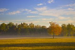 Tree in a Field. Early morning light on with a tree in a field Stock Photo