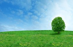 Tree on the  field Royalty Free Stock Photo