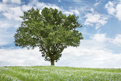 Tree in field Stock Photo