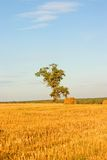 Tree on field Royalty Free Stock Photos