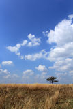 Tree in the field. Alone tree in the brown field Stock Photography