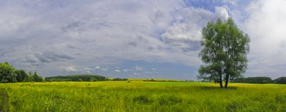 Tree and field. Green field and a tree in summer Royalty Free Stock Images
