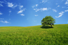 Tree in a field Stock Photography