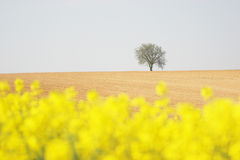 Tree in a field stock photos