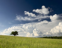 Tree on the field. The tree on the field Royalty Free Stock Images