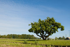 Tree on the field against blue background Royalty Free Stock Images