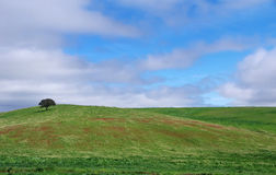 Tree in field at alentejo, Portugal Stock Image