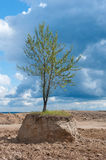 tree in field. Artificially  tree in a field, cut the ground around the tree Royalty Free Stock Image