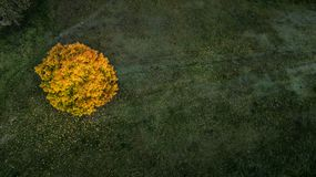 Tree among field autumn. bird`s eye view stock photography
