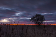 Tree in a field on a background of  sunset Royalty Free Stock Image