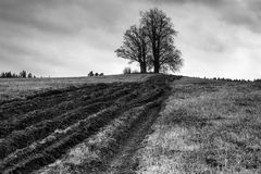 Tree on a field. Black and white photography of lonely tree on the empty field Stock Image
