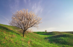 Tree on field and blue sky. Stock Photo