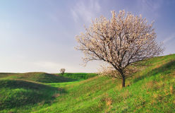 Tree on field and blue sky. Royalty Free Stock Photos