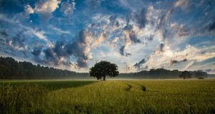 Tree, Field, Cornfield, Nature Royalty Free Stock Photography