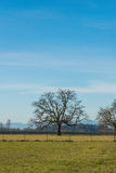 Tree in field in countryside on the day.  Stock Images