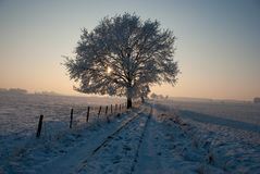 Tree on winter morning stock photo
