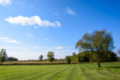 Tree On The Field. This is a farm in Minnesota. It features a large tree as the subject. This was taken during early fall Royalty Free Stock Photos